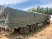1.8米丛生北海道黄杨 (15)