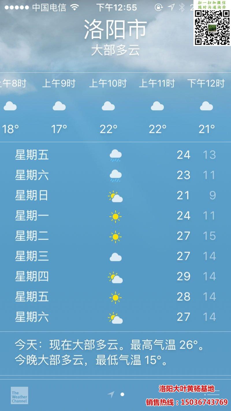 4月15日天气预报