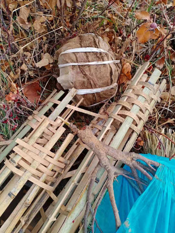 通风用的竹笼